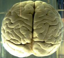 Brain in a jar.png